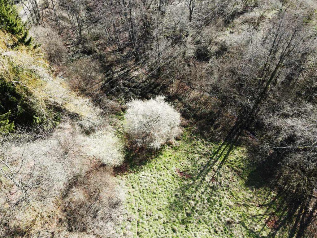 Wiesengrundstück am Birnbach